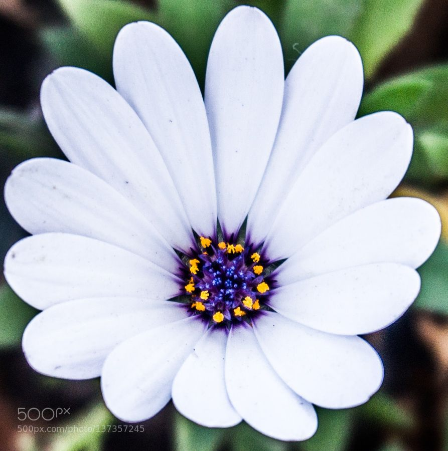 White by CFLL