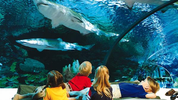 Sleep with the sharks at Ripley's aquarium in Gatlinburg ...