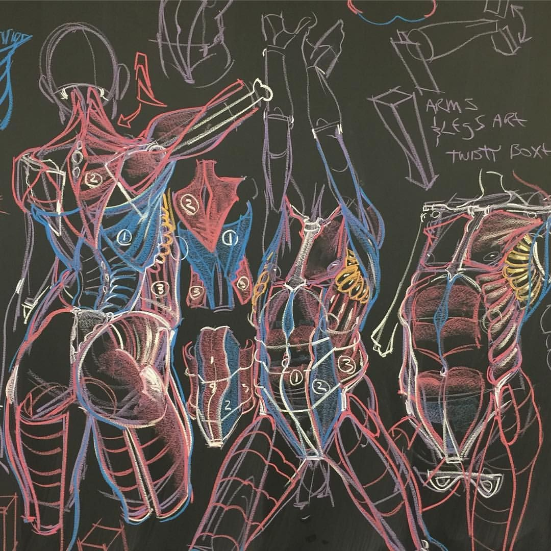 human anatomy for artists website