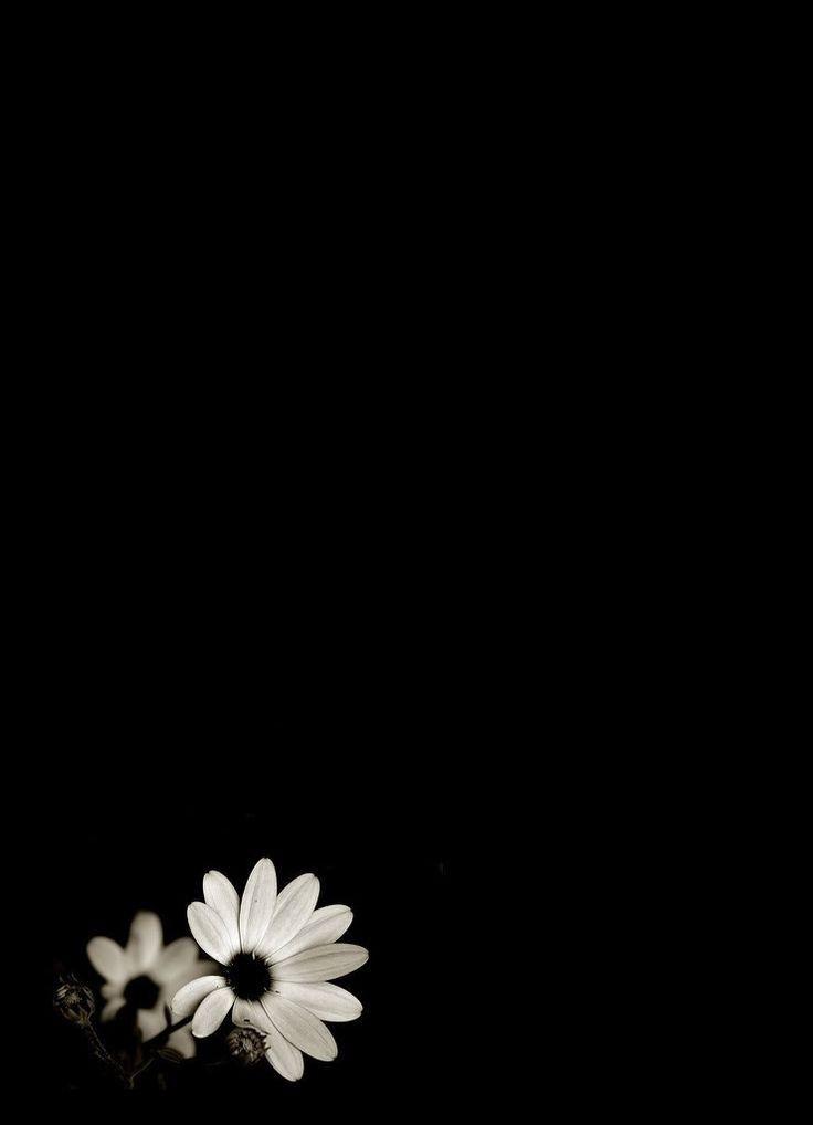 Background Bunga Hitam : background, bunga, hitam, Dunia, Hanya, Sementara, Arkaplan, Tasarımları,, Papatyalar,, Duvar