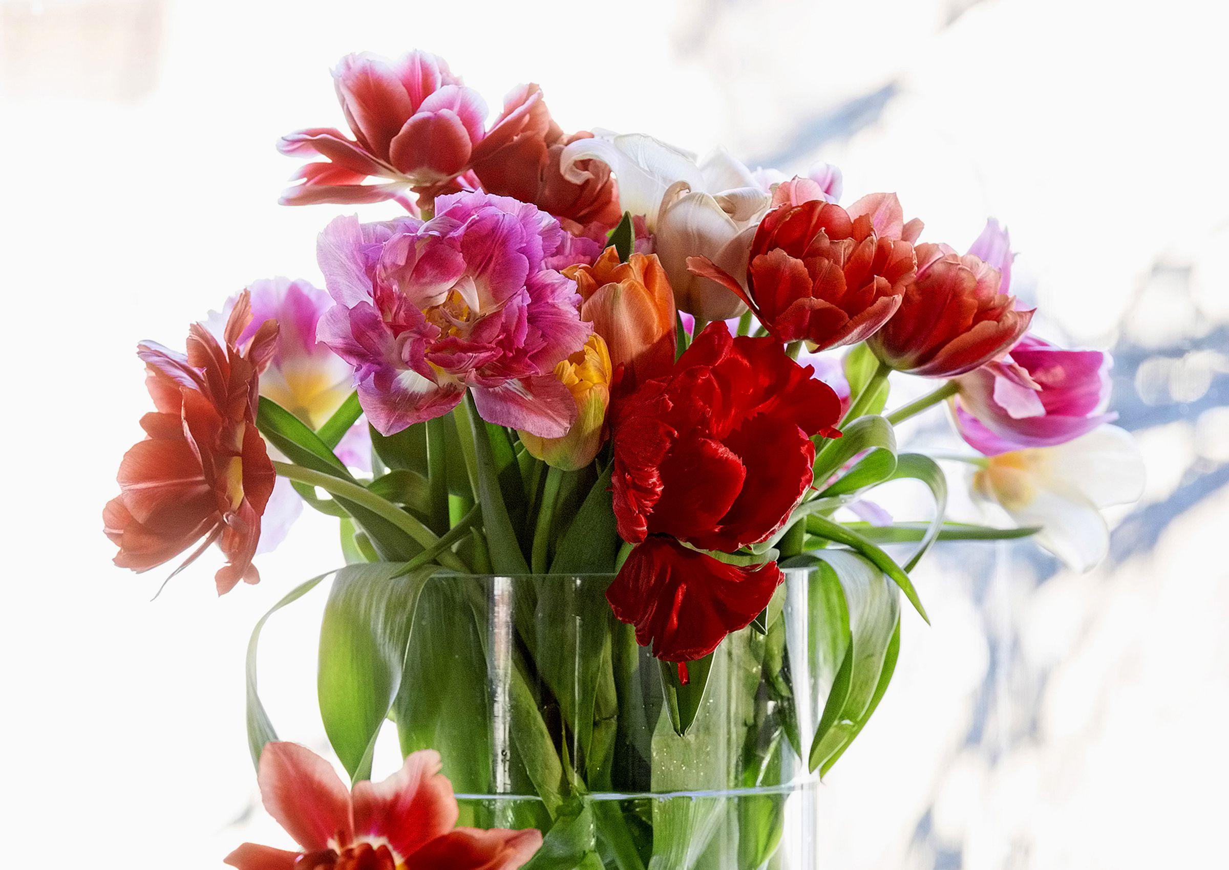 Tulppaanit kuuluvat keväiseen maljakkoon. Viherpihan hoito-ohjeilla saat ne kestämään!