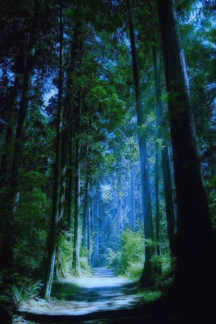 Blue Forest, Vancouv #running #runningmen #menfitness #runningtees #runningwear #runningwatch #runningwatches #sportswatches #sportsmenwatches #menwatches