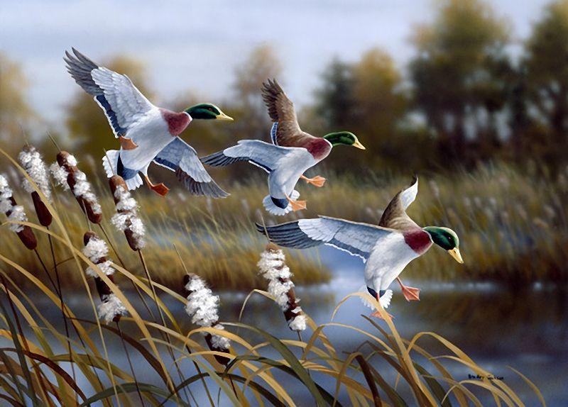 Картины птицы фото