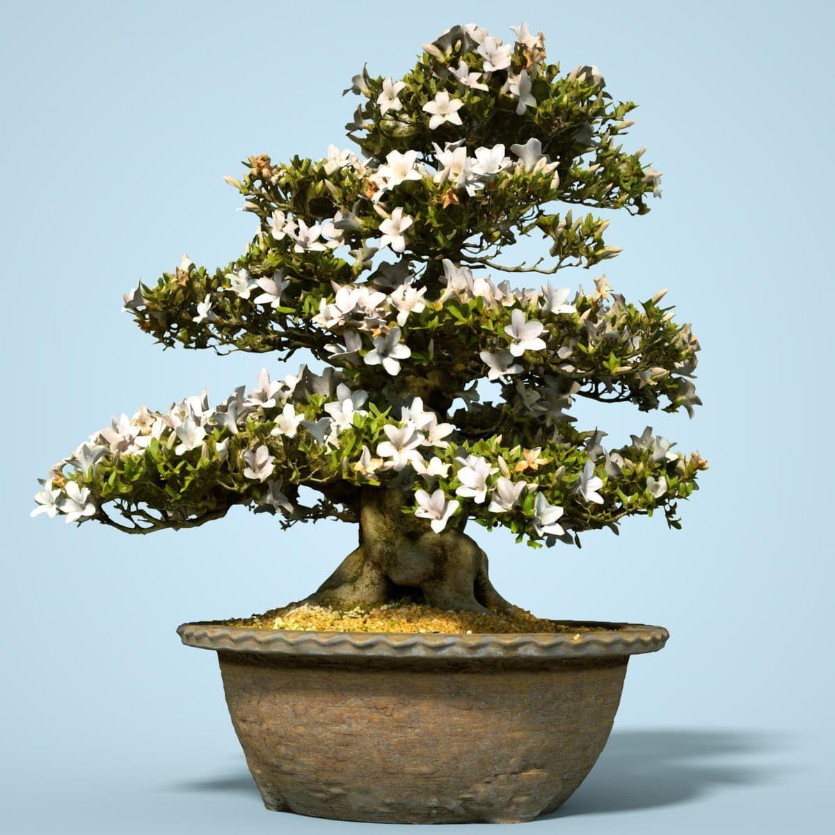 Satsuki Bonsai Tree Blossom 3d Obj 3d Model Bonsais Pinterest