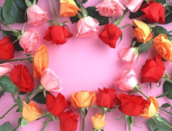 Bonitas rosas en diferentes colores