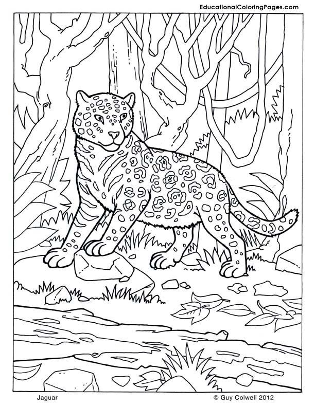 Mammals Book Four Coloring Pages | Animal Coloring Pages for Kids ...