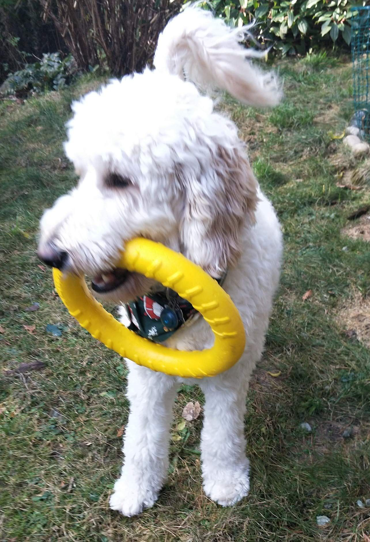 MASKOTA Rubber Ring Dog Toy for Tug War Fun for Throw
