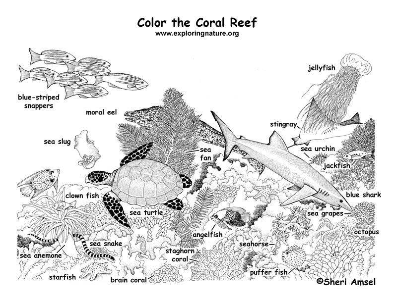 Coral Reef Coloring Page Coral Reef Craft Coral Reef Ecosystem