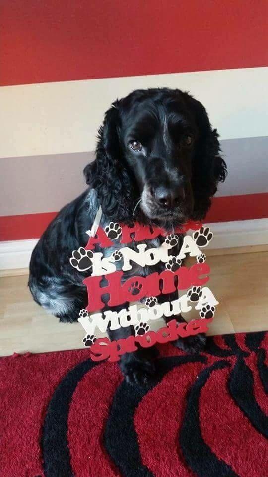 Sprocker Sprocker Spaniel Spaniel Spaniel Kunst Spaniel Hond Hond Eigenaar Gift Geschenk Voor De Minnaars Van De Hond Cadeau Voor Lieveling Verliefden Ni Dogs Animals Houten