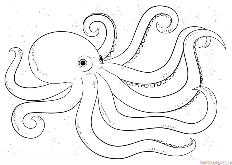draw-octopus