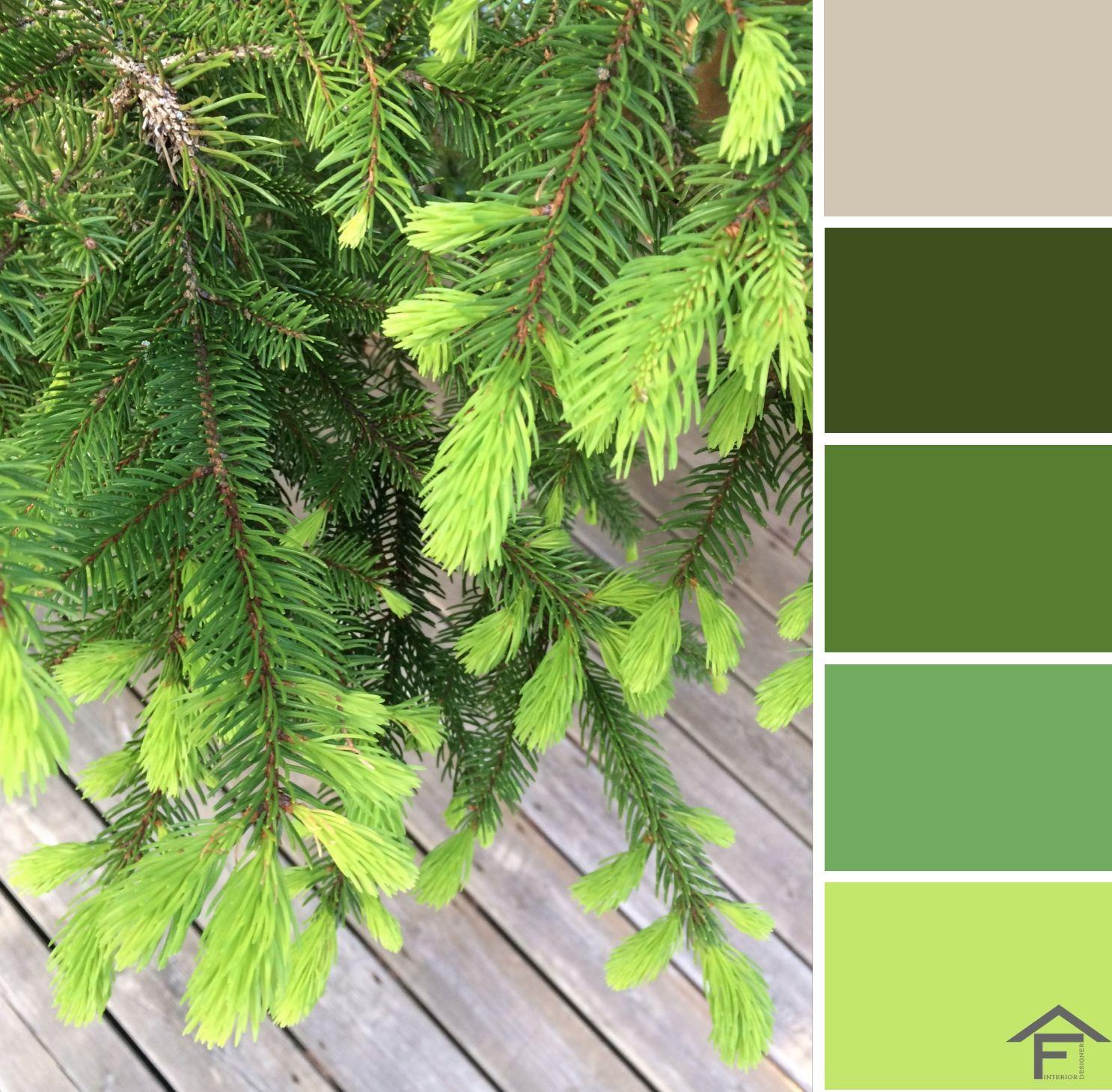 palette, colore, piante, giardino, tendenze, stili, ispirazione ...