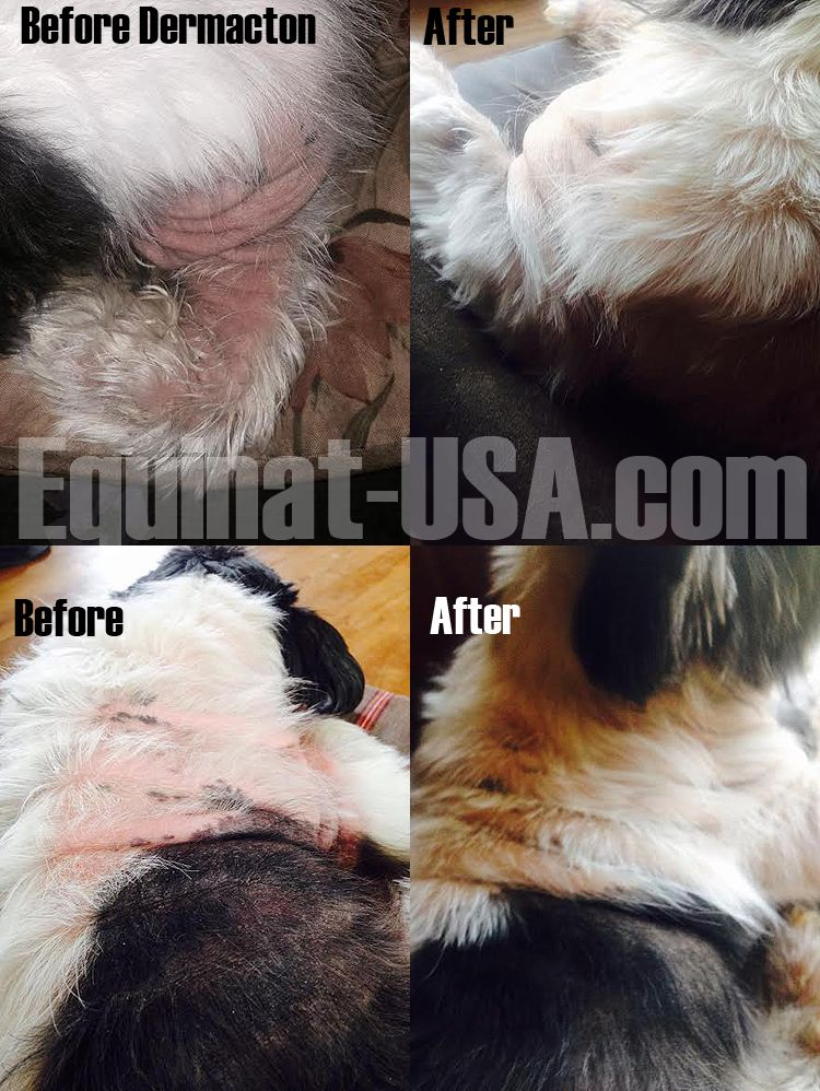 Dermacton Reviews Dog Clinic Skin Bumps Itchy Dog
