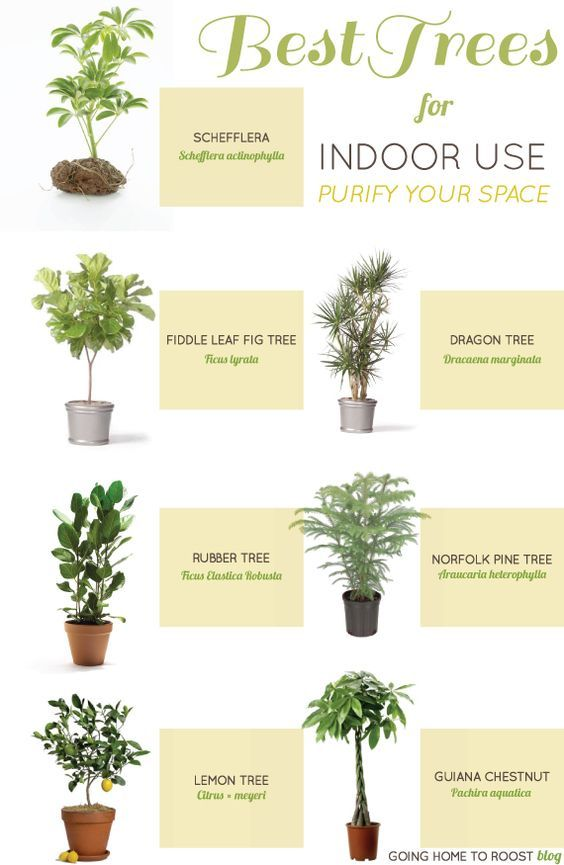 Best Trees For Indoor Use Plants Indoor Plants Best Indoor Plants