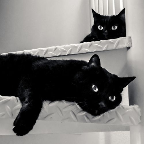 I see you in every black cat I see Cat lovers, Cats and