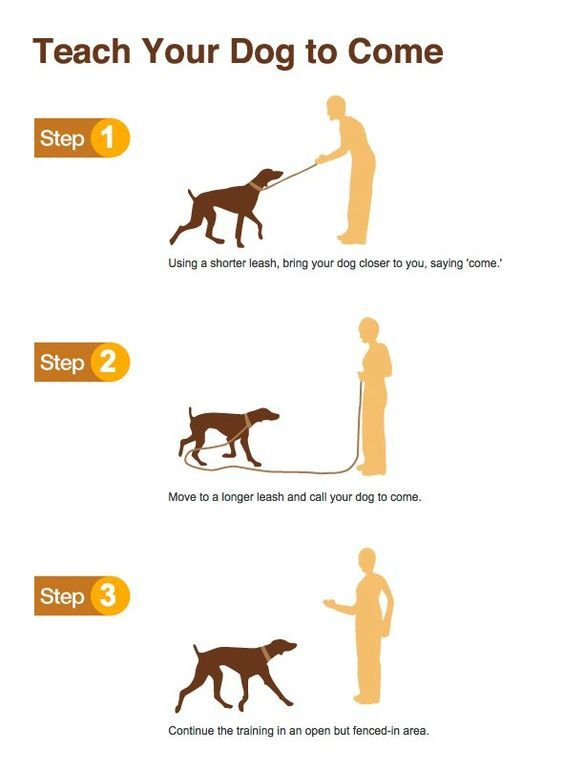 Awesome Dog Training Tips That Anyone Can Use Dog Training