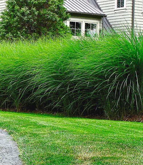 Gartenpflanzen Winterhart Immergrun – colorseven.info