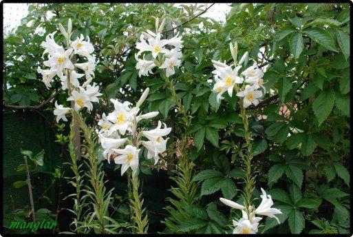 Azucenas Casa Plants