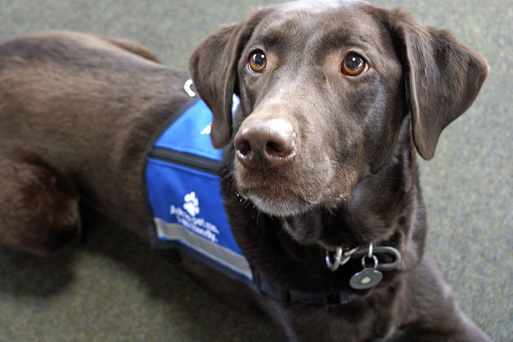 Service Animals and Social Security Disability Benefits
