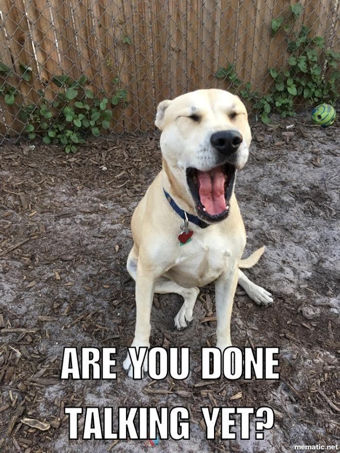 Labrador Retriever dog for Adoption in Pensacola, FL. ADN