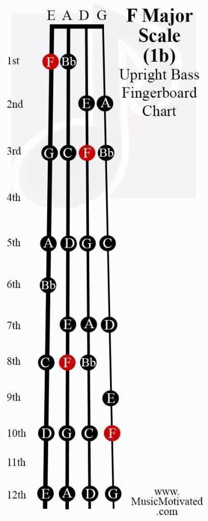 Double Bass Strings Notes : double, strings, notes, Major, Scale, Upright, Double, Fingerboard, Notes, Chart, Learn, Guitar,, Guitar, Scales,