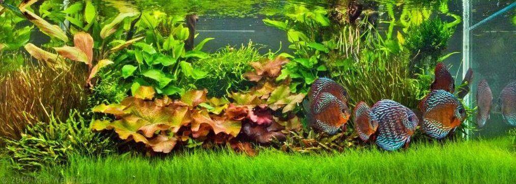 Live Plants In Aquarium Aid The Survival Of Fish By Adding Nutrients And Oxygen To Their Environment Malikaka Com Planted Aquarium Live Aquarium Plants Plants