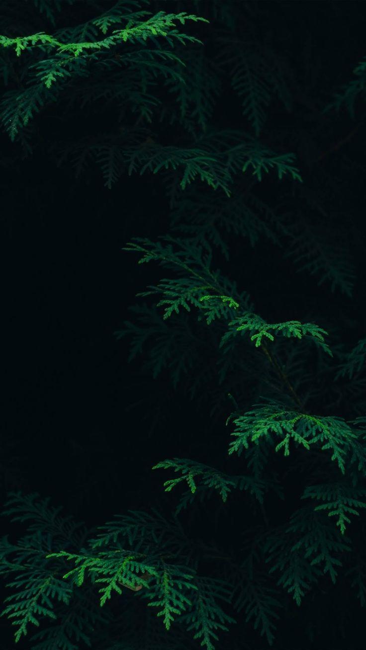 Wallpaper Лес иллюстрация, Зеленые фоны, Пейзажи