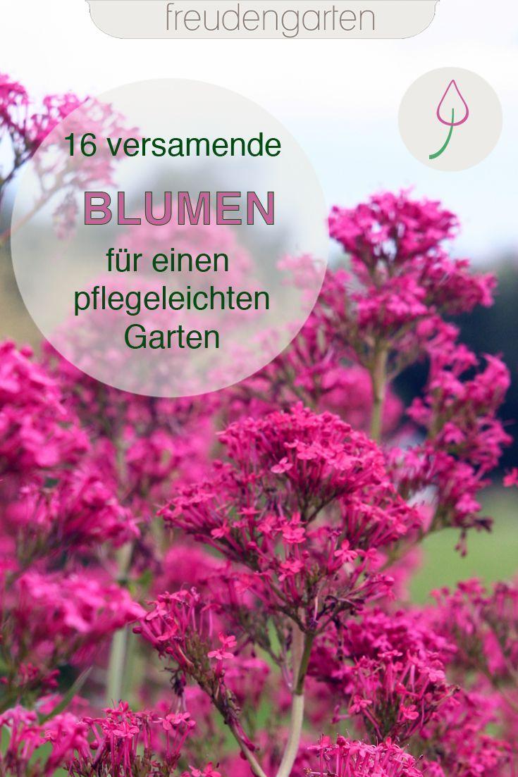 Blackbox Gardening mit einjährigen Blumen