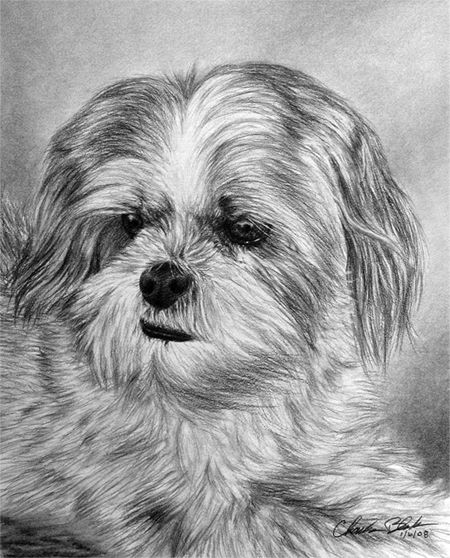 Coloriage Chien Lhassa Apso.Cute Lhasa Apso Drawing By Eidolic Deviantart Com On Deviantart