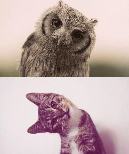 Owl or cat?