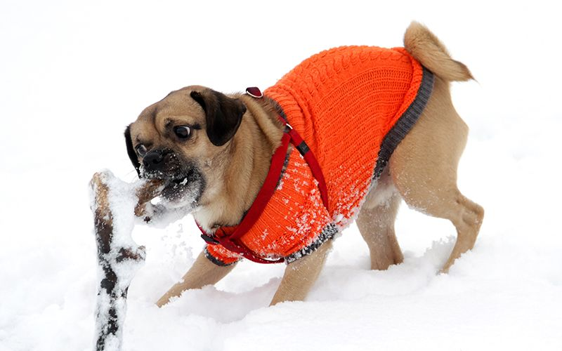A Guide To The Best Free Crochet Dog Sweater Patterns By Dogs