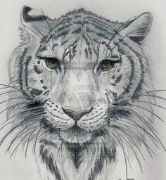Awesome Art Sketches Google Search Cool Drawings Cool