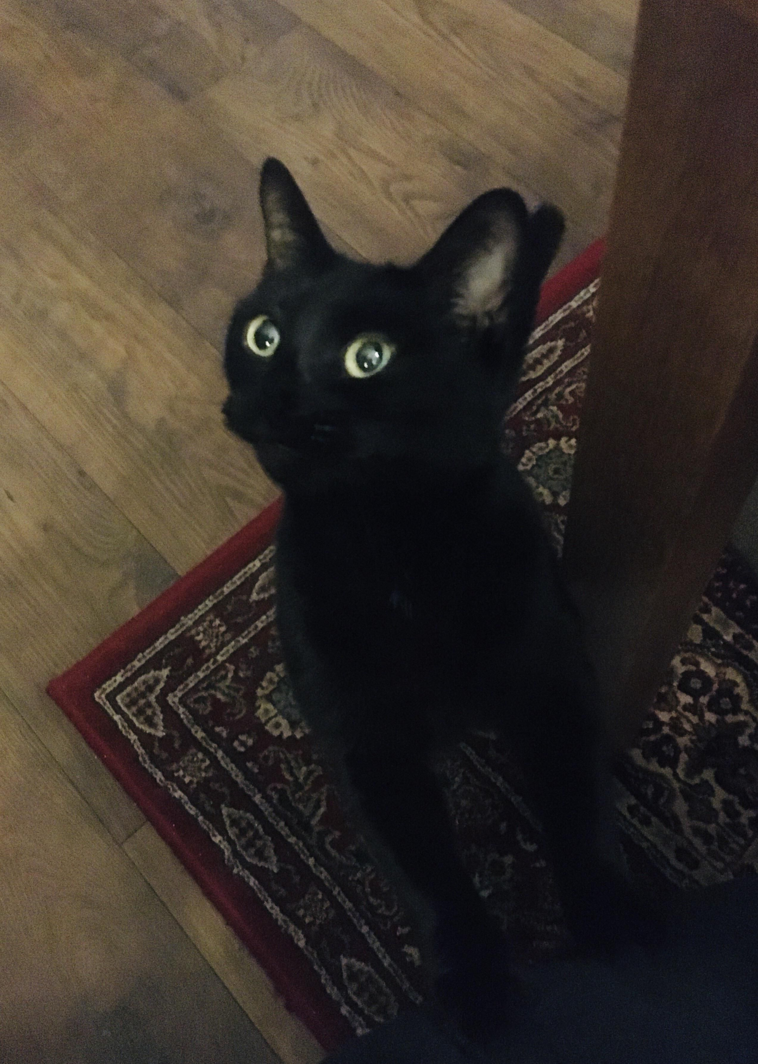Those Eyes In 2020 Cute Cats And Kittens Black Cats Rock Kittens Cutest