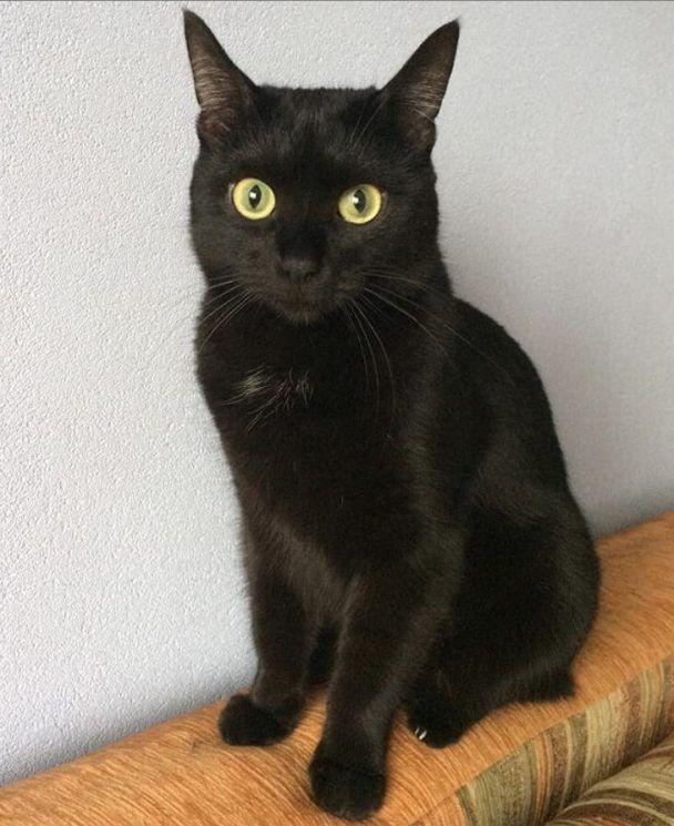 140 Cool Black Cat Names Cat names, Cute cats, Cats