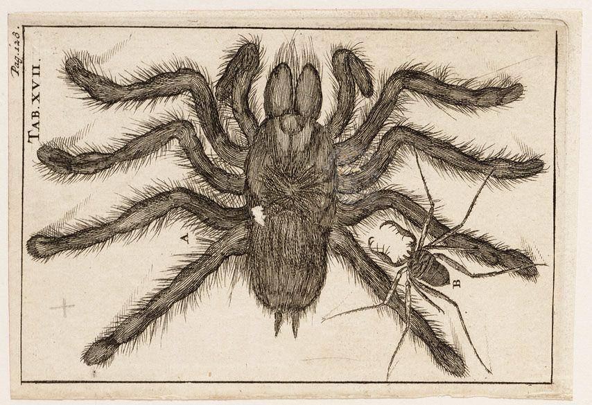 Jan Luyken 1649 1712 Kunstwerk Fotografie