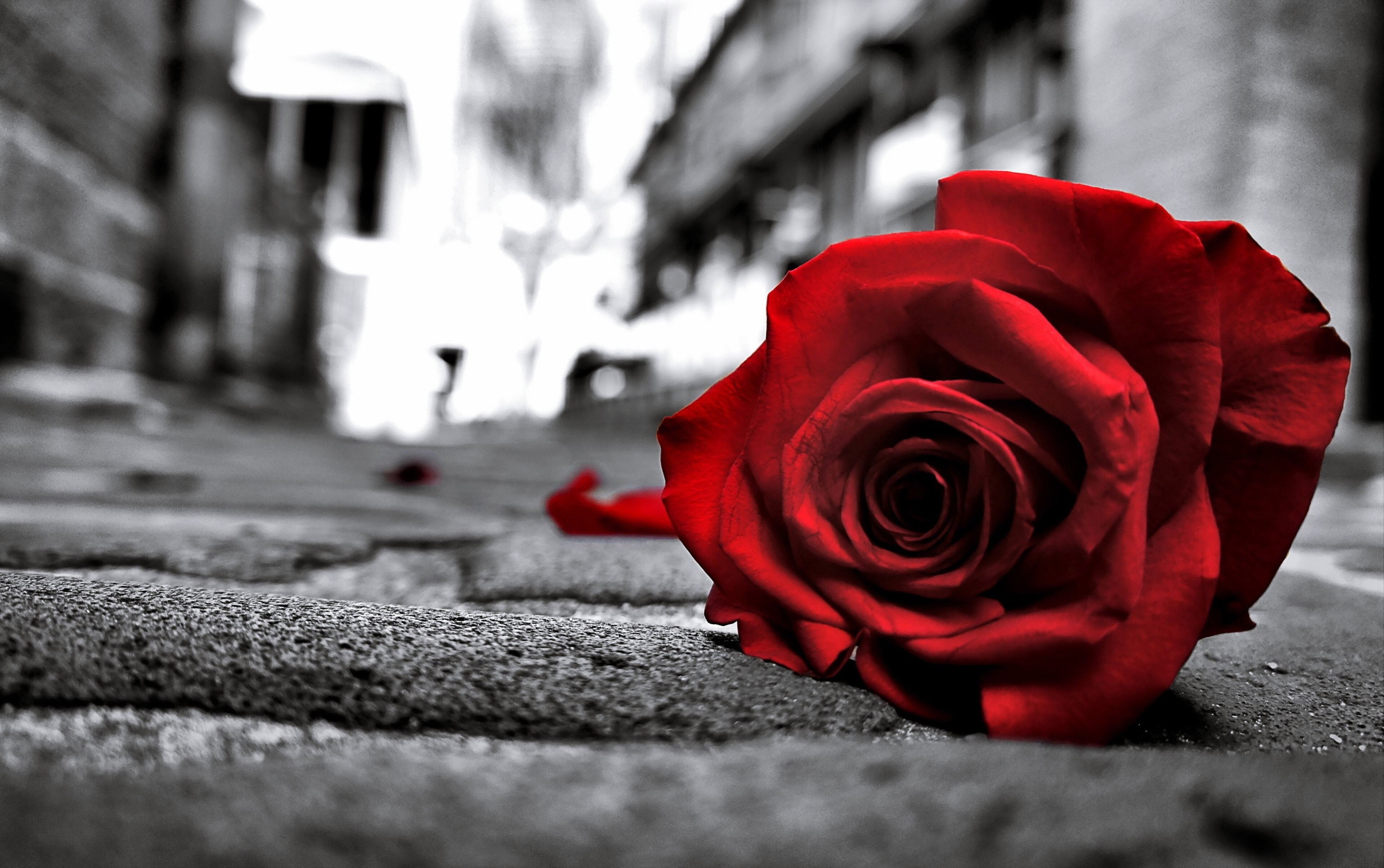 What An Independent Woman Wants Black And White Background Beautiful Red Roses White Photography