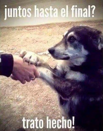 Con Frases Te Amare Hasta El Final Perros Frases Perros