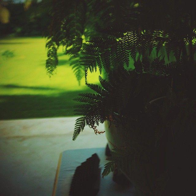 """""""#winter #greens #tropics """""""