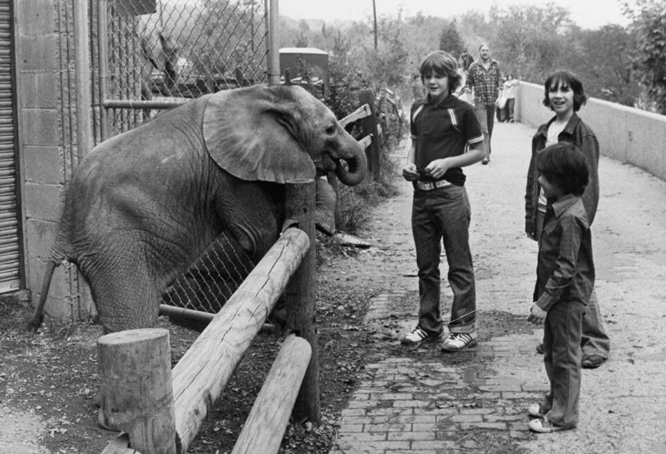 Little Diamond in 1978 at Knoxville Zoo. He was the first