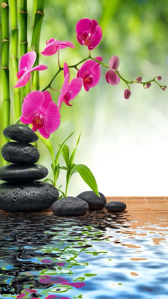 Artistic Photo Images Photography Peinture Zen Fond D Ecran Orchidee Fond Ecran Zen