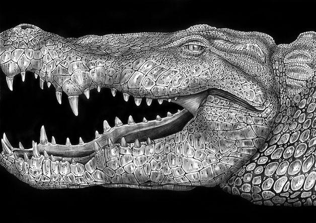 Ilustrações hiper-realistas feitas com canetas por Tim Jeffs #Illustration