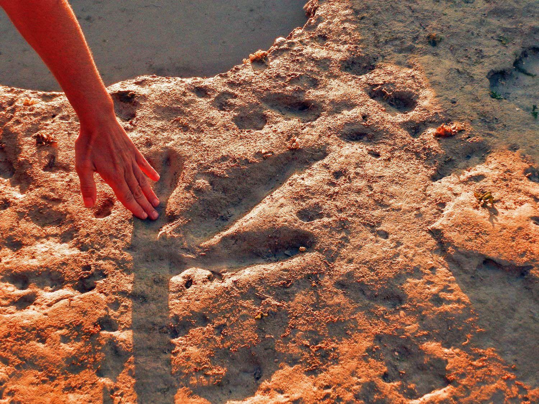"☩ Dinosaur Footprints ~ Broome Australia An 80-kilometre ""dinosaur  trackway"" in the Kimberley region of Western Australia is a scient…    Broome australia, Broome western australia, Moving to australia"