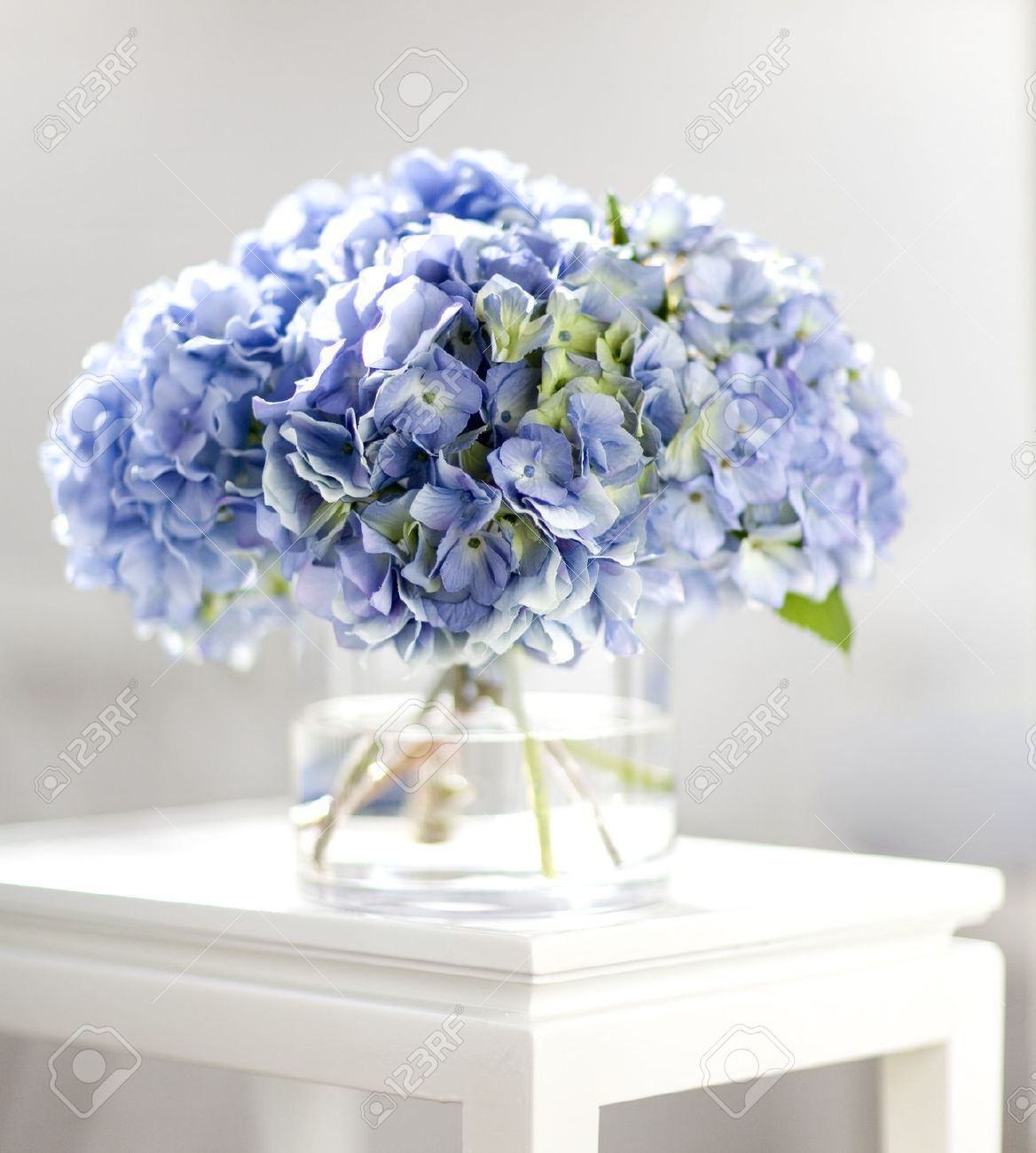 bouquet hortensia banque d 39 images et photos libres de droits image 9481486 flowers. Black Bedroom Furniture Sets. Home Design Ideas