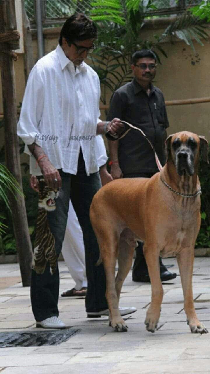 Pin By My Info On Ashok Amitabh Bachchan Star Family Bollywood