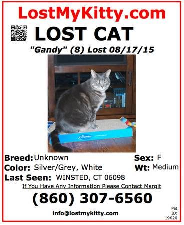 MISSING Not a Stray, Not Homeless last seen on Monday
