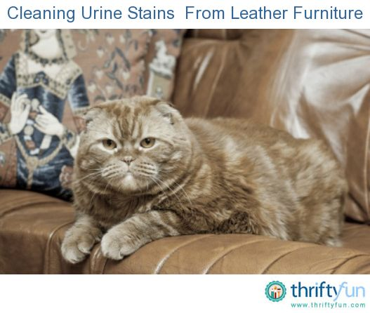 Cleaning Urine Stains And Odors From Leather Furniture