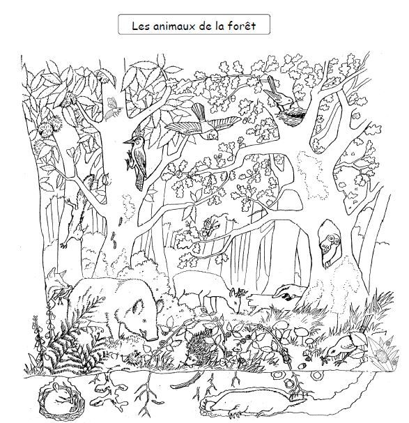 Decouverte du monde : la forêt CP et CE1