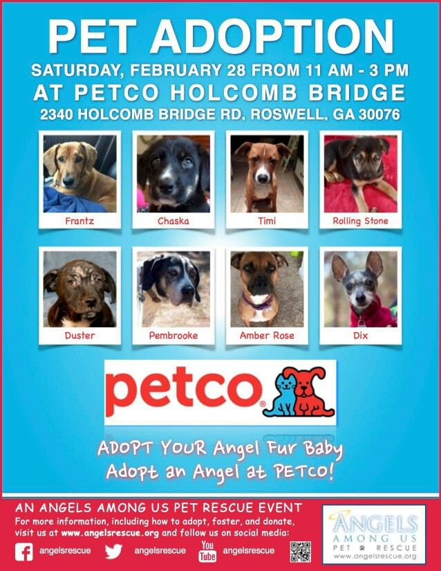 Petco Adoptable Dogs Pet Adoption Adoption Day Dogs