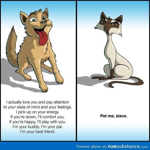 Hahahaha, the difference between dogs and cats. Love it!!! lol XD <------ swap the animals, and you have my cat and dog.
