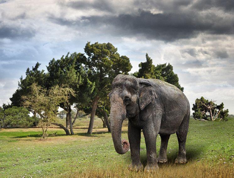 Ihan tavallinen päivä eläintarhassa - norsu, harja ja kutiava otsa...