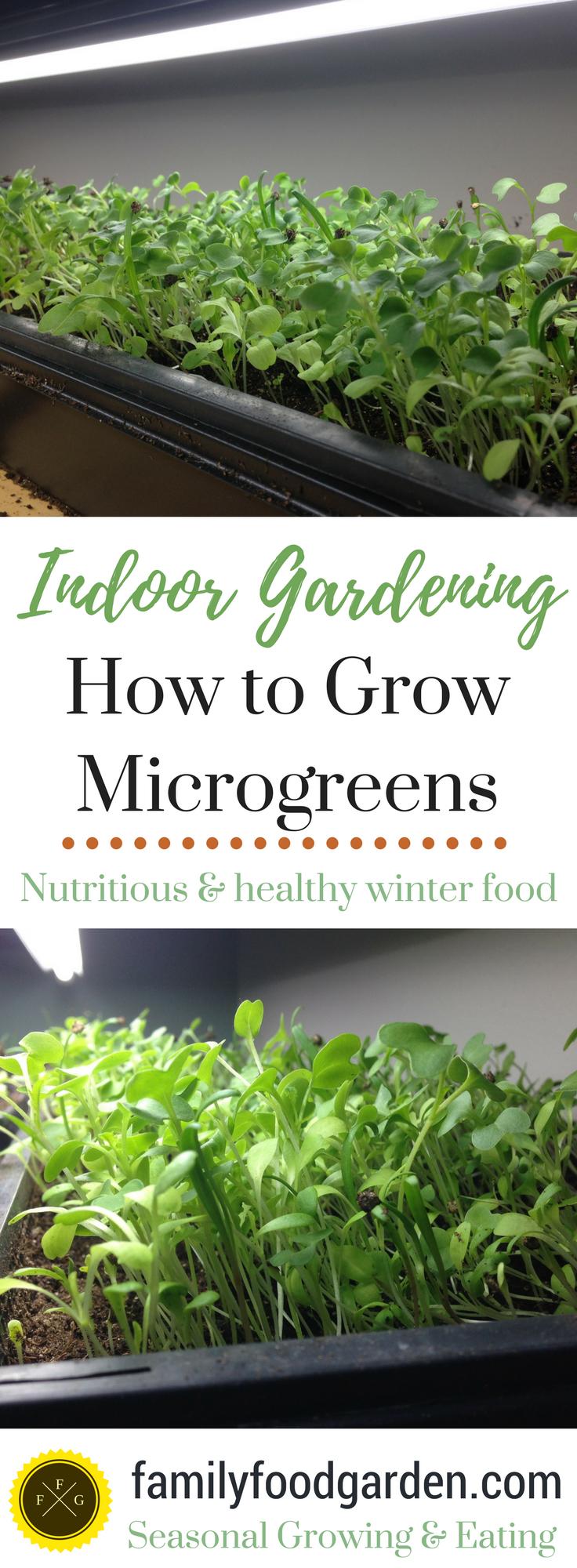 growing indoor microgreens indoor and gardens